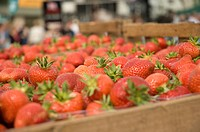 England, North Yorkshire, York, Punnets of fresh English strawberries.