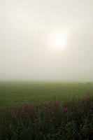 Field in the morning haze, Shimosuwa town, Nagano prefecture, Japan
