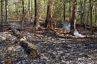 tennessee, united states of america, damage from a ground forest fire in the great smoky mountains national park