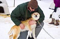 Tourist hugs a sled dog, Alyeska Resort near Moose Meadows at Girdwood in Southcentral Alaska