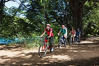 Four people cycling through forest (thumbnail)
