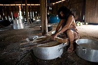 For the Xingu Indians in the amazone, is maniok is beside rice and fish, the main food intake they grow their maniok in small fields around their hous...