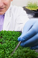 Scientist researching on plants in a laboratory