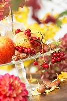 Autumn still life with apples, rose hips and nuts
