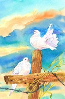 Animal, Watercolor painting of two doves standing on the wood