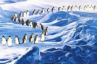 Animal, Watercolor painting of a large group of penguins walking on the snow land