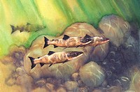 Animal, Watercolor painting of fishes in the water