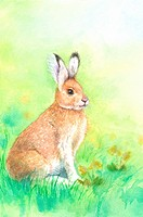Animal, Watercolor painting of a rabbit crouching on the lawn