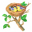 Animal, Watercolor painting of two birds sleeping in the nest