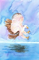 Animal, Watercolor painting of an eagle flying above water