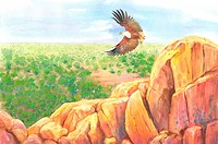 Animal, Watercolor painting of an eagle flying above rocks