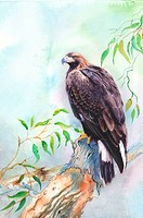 Animal, Watercolor painting of an eagle perching on branch