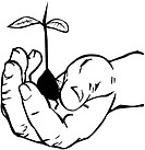 Hand Holding Plant