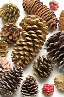 Different sizes of pine cones