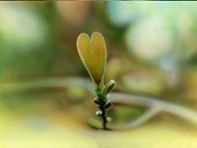 Close_up of heart shaped leaf