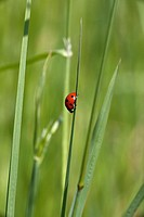 a ladybug on a blade of grass