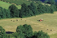 HAY GATHERING IN NORMADY, ORNE 61, FRANCE