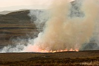 Muirburn Burning Heather On Moorland Inverness_shire Highland Scotland UK,