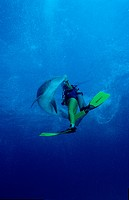 bottlenose dolphin and scuba diver, Tursiops truncatus, Caribbean Sea, Bahamas