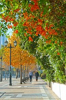 Apoquindo Avenue in autumn in Santiago city
