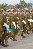 Police with dogs in Military Parade of Santiago city Chile