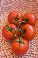 Ripe vine tomatoes