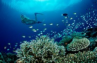 Coral Reef and Skin Diver, Indian Ocean, Meemu Atoll, Maldives
