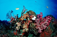 Colored Coral Reef, Pacific, Micronesia, Palau
