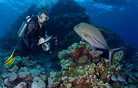 Marine Biologist inspect Corals and Species richness, Ngulu Atoll, Caroline Islands, Pacific, Yap, Micronesia