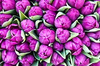Tulip bouquets on the market