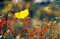 Leaves in autumn (thumbnail)