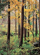 Trees in autumn (thumbnail)