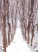 path in winter