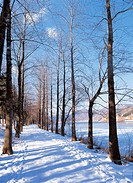 tree_lined street in winter