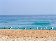 beach and gulls