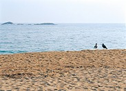 Beach and gulls (thumbnail)