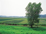 tree and peddy fields