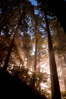 Sunlight shining through trees, Yamagata, Yamagata Prefecture, Japan
