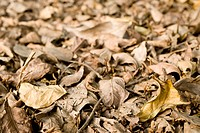 Dry, Brown Leaves On The Ground