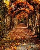 Hornbeam Alles, Birr Castle, Co Offaly, Ireland