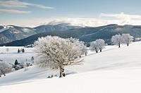 Winter200901