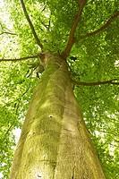 Green tree top
