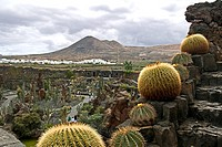 Jardin de Cactus, Guatiza, Lanzarote, Canary Islands, Spain, Europe