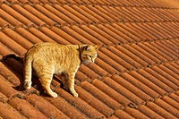 Cat on a tiled roof