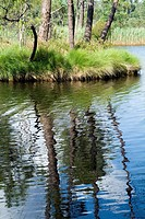 Rippled water in pond reflecting trees, Landes Forest, Hostens, Aquitane, France.