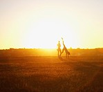 Friends playing in field at sunset