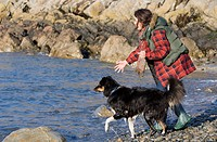 Domestic Dog, girl playing fetch with Border Collie on beach, Pembrokeshire, Wales, winter