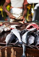 Man cutting fish at market, Galle, Sri Lanka