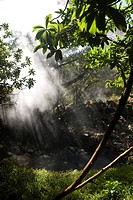 Steam from hot spring _ National park Rincon de la Vieja