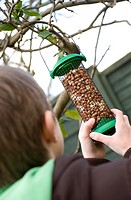 Boy hanging peanut birdfeeder from tree branch in garden, England